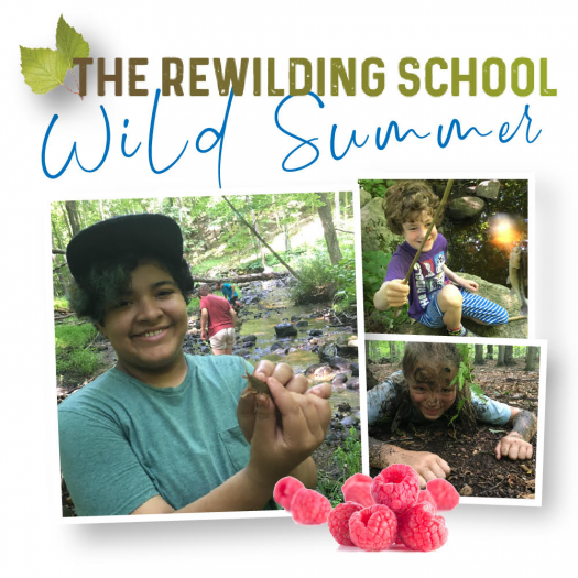 The Rewilding School's Wild Summer
